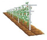 EcoTrellis Raspberry/Vineyard Trellis and Stake, 7 ft. center post with 2 arms - 3 ft. and 2.5 ft.  Pack of 2